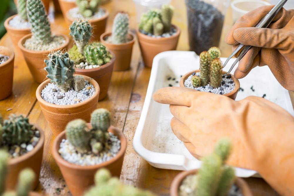 Planten & bloemen als uitvaartbedankje