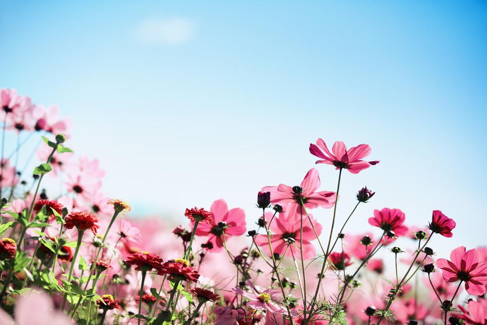 Betekenis van bloemen in het rouwboeket