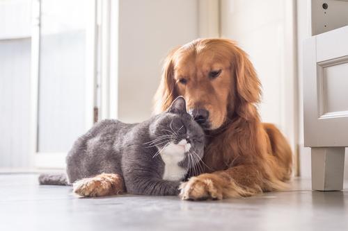 Wat kun je doen als je huisdier is overleden?