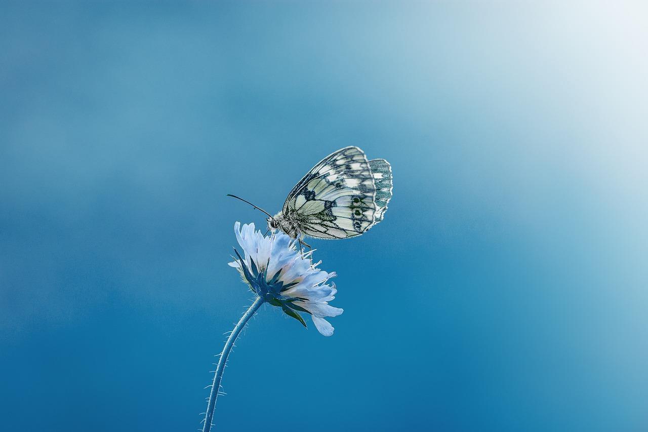 Kleine vlinder