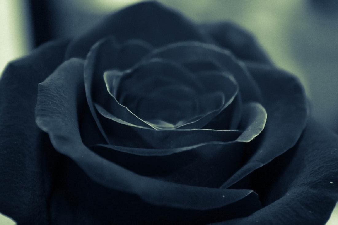 zwarte bloemen in een rouwboeket