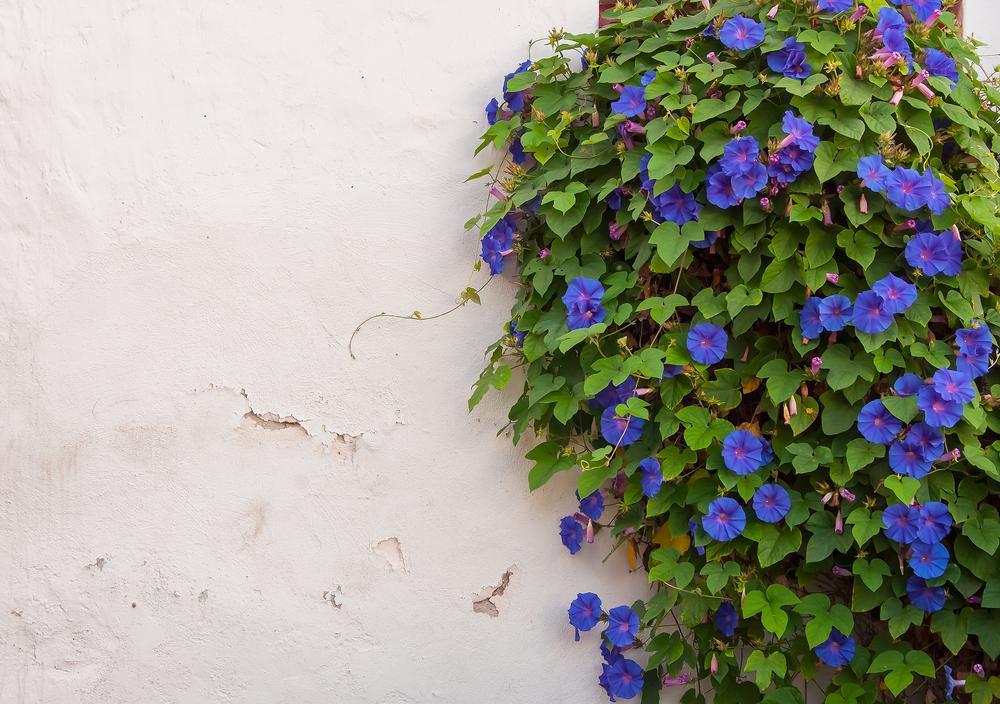 Bloemen die een verhaal vertellen