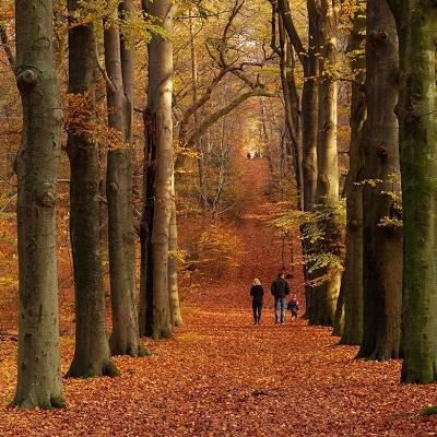 Urnengedenkpark Nederland