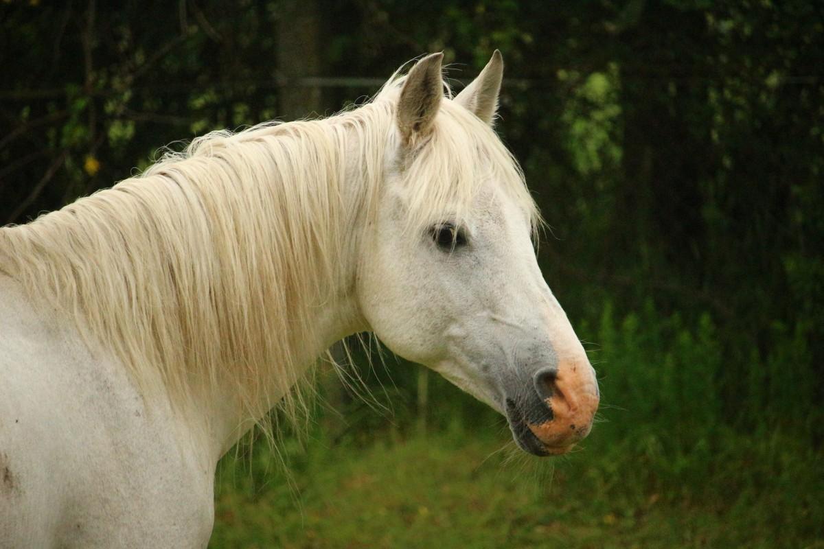 paard loopt mee in rouwstoet